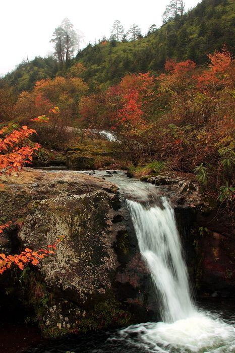 荥经龙苍沟国家森林公园风光-荥经牛背山风景区